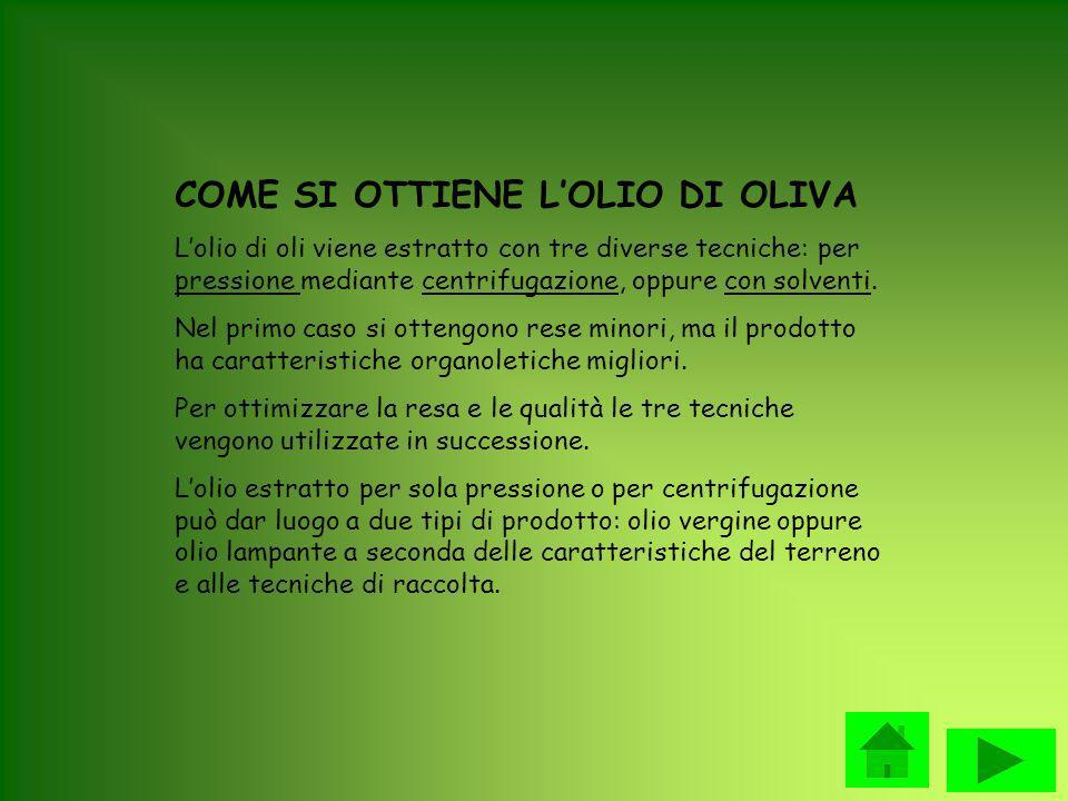 COME SI OTTIENE L'OLIO DI OLIVA