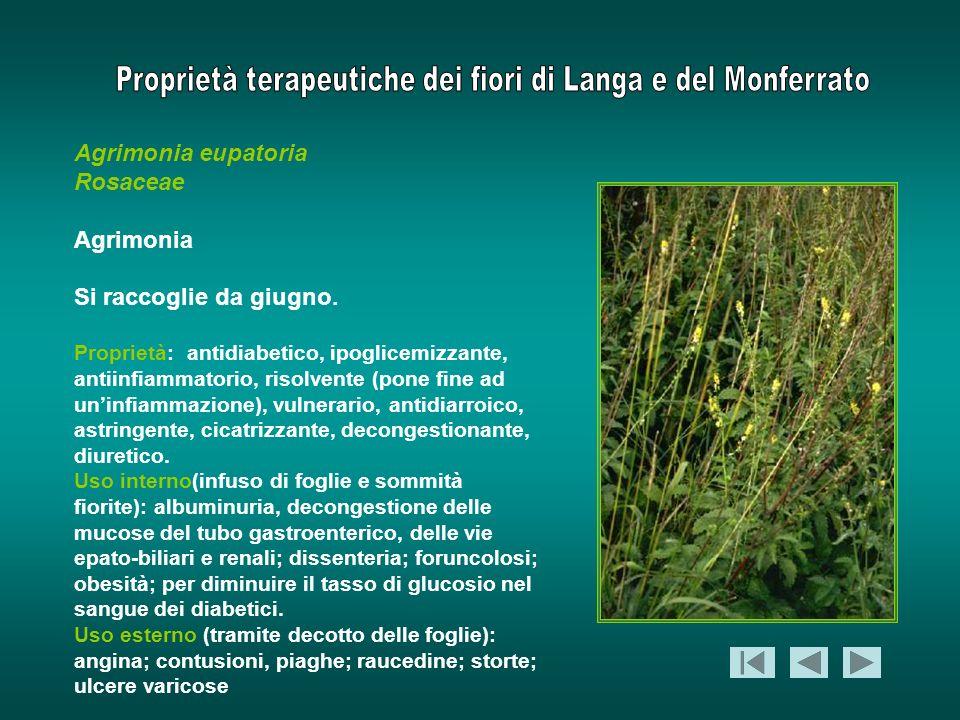 Agrimonia eupatoria Rosaceae Agrimonia Si raccoglie da giugno.