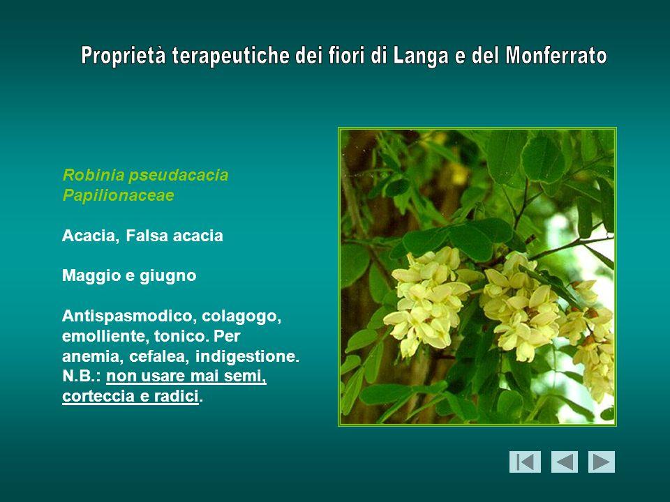 Robinia pseudacacia Papilionaceae. Acacia, Falsa acacia. Maggio e giugno.