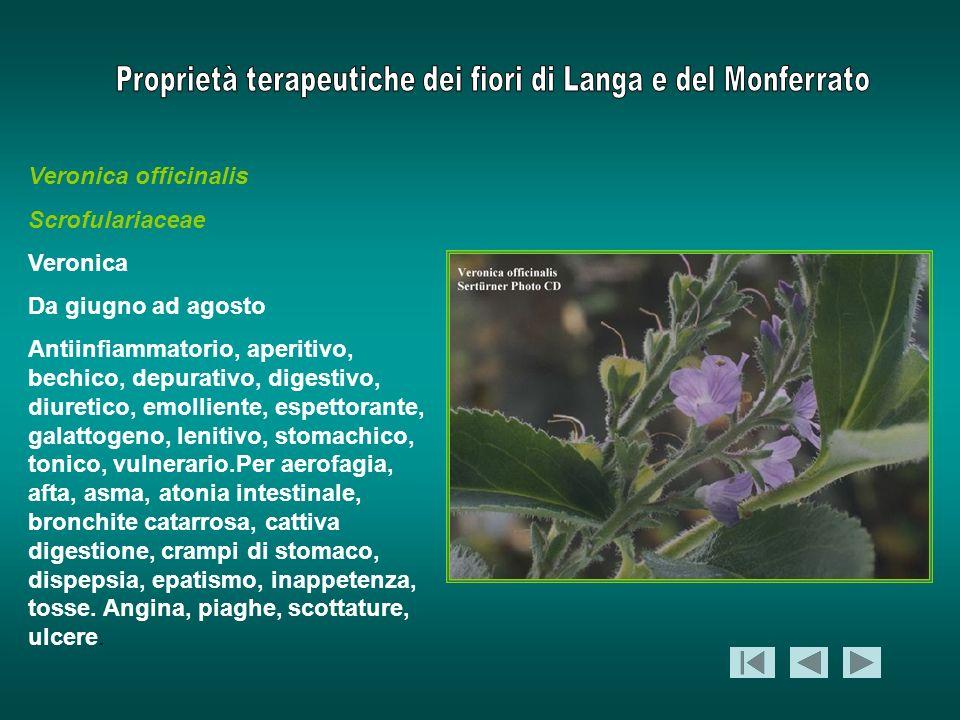 Veronica officinalis Scrofulariaceae. Veronica. Da giugno ad agosto.