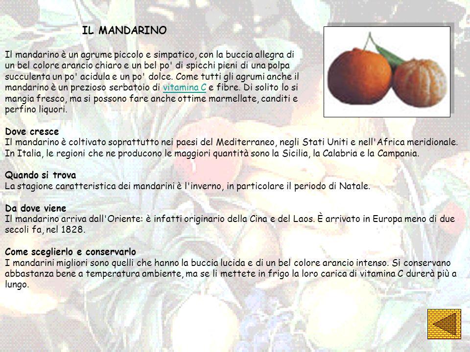 IL MANDARINO Il mandarino è un agrume piccolo e simpatico, con la buccia allegra di.