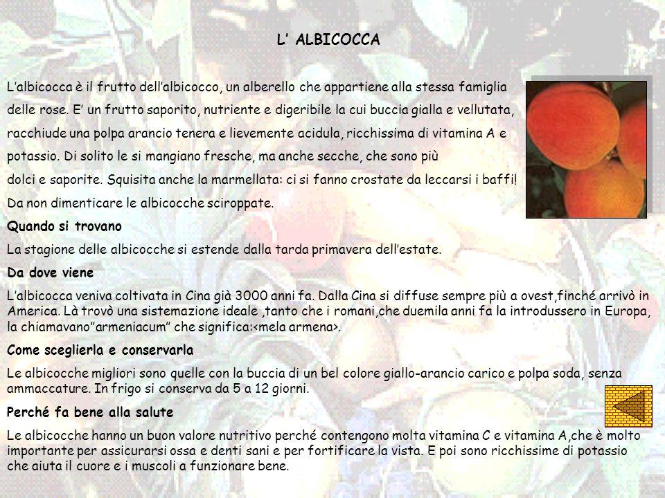L' ALBICOCCA L'albicocca è il frutto dell'albicocco, un alberello che appartiene alla stessa famiglia.