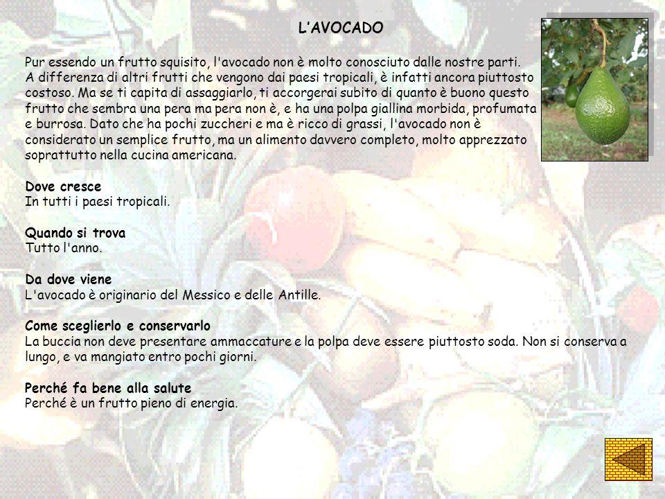 L'AVOCADO Pur essendo un frutto squisito, l avocado non è molto conosciuto dalle nostre parti.