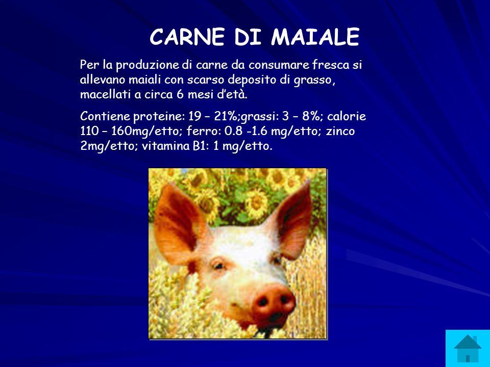 CARNE DI MAIALE Per la produzione di carne da consumare fresca si allevano maiali con scarso deposito di grasso, macellati a circa 6 mesi d'età.