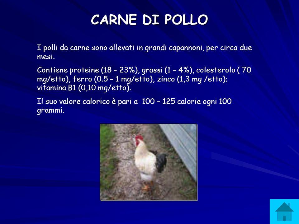 CARNE DI POLLO I polli da carne sono allevati in grandi capannoni, per circa due mesi.