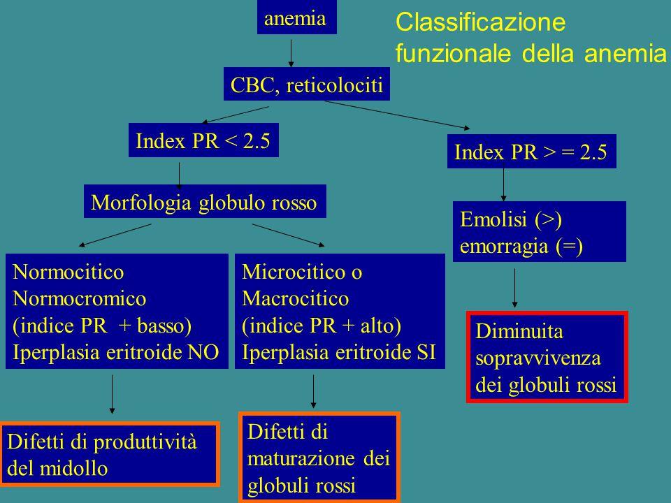 funzionale della anemia
