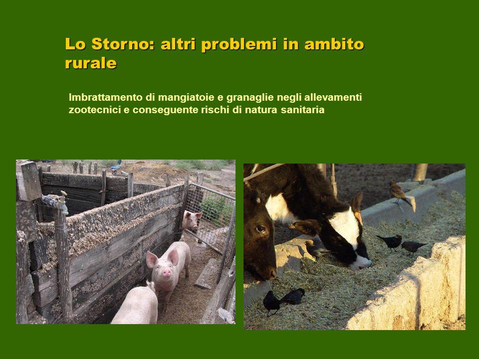 Lo Storno: altri problemi in ambito rurale