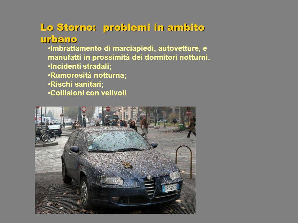 Lo Storno: problemi in ambito urbano