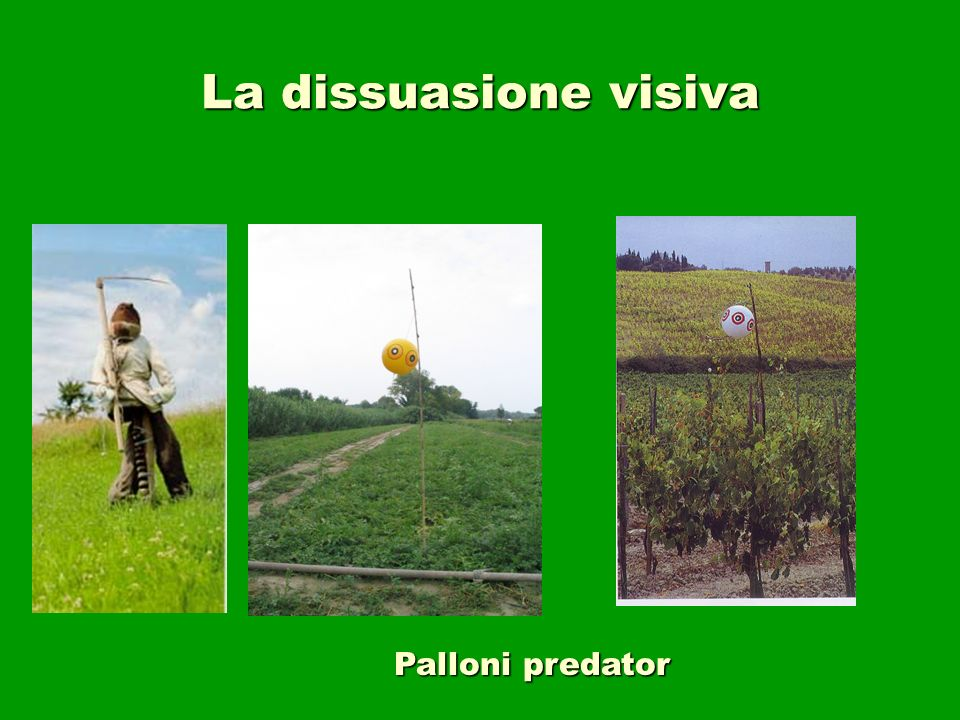 La dissuasione visiva Palloni predator