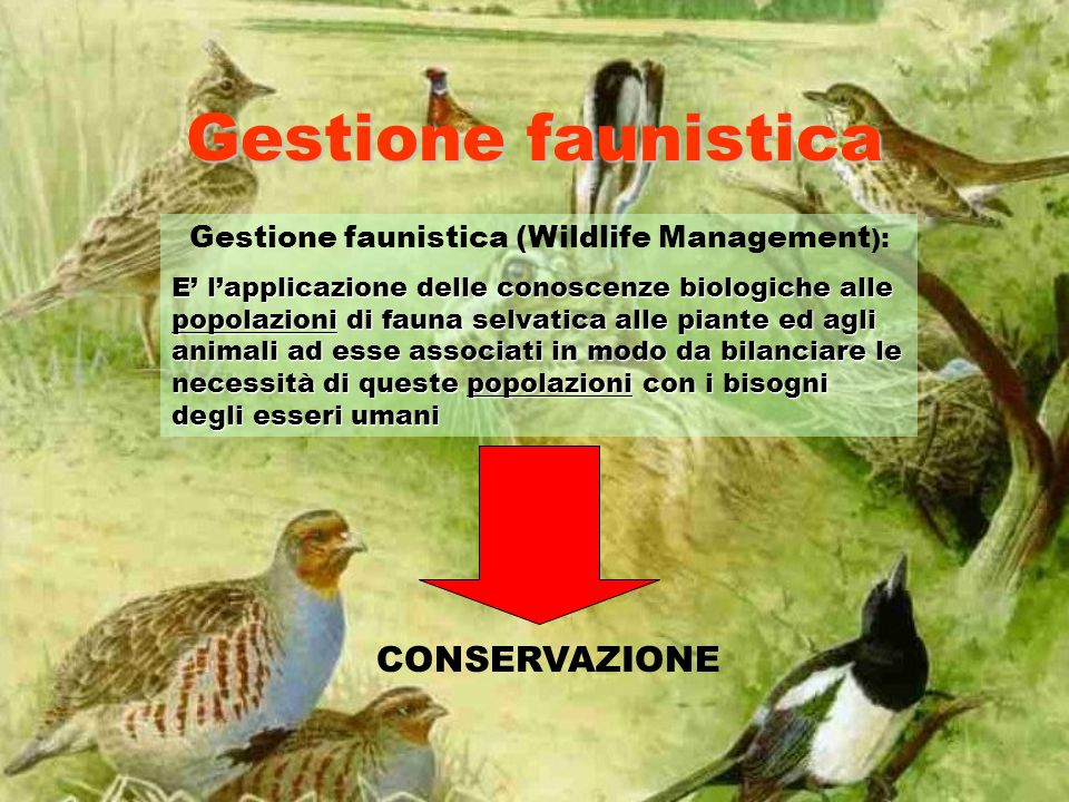 Gestione faunistica (Wildlife Management):
