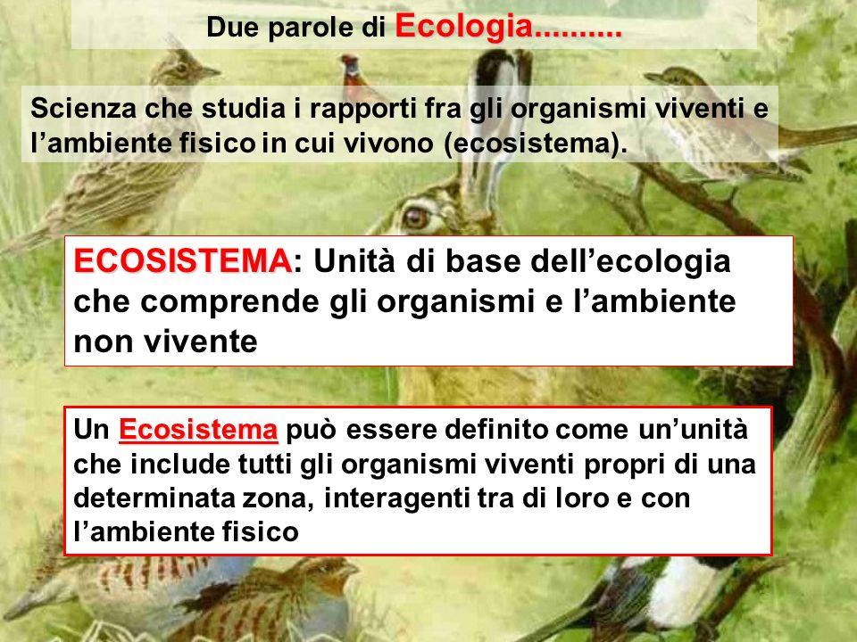 Due parole di Ecologia.......... Scienza che studia i rapporti fra gli organismi viventi e l'ambiente fisico in cui vivono (ecosistema).