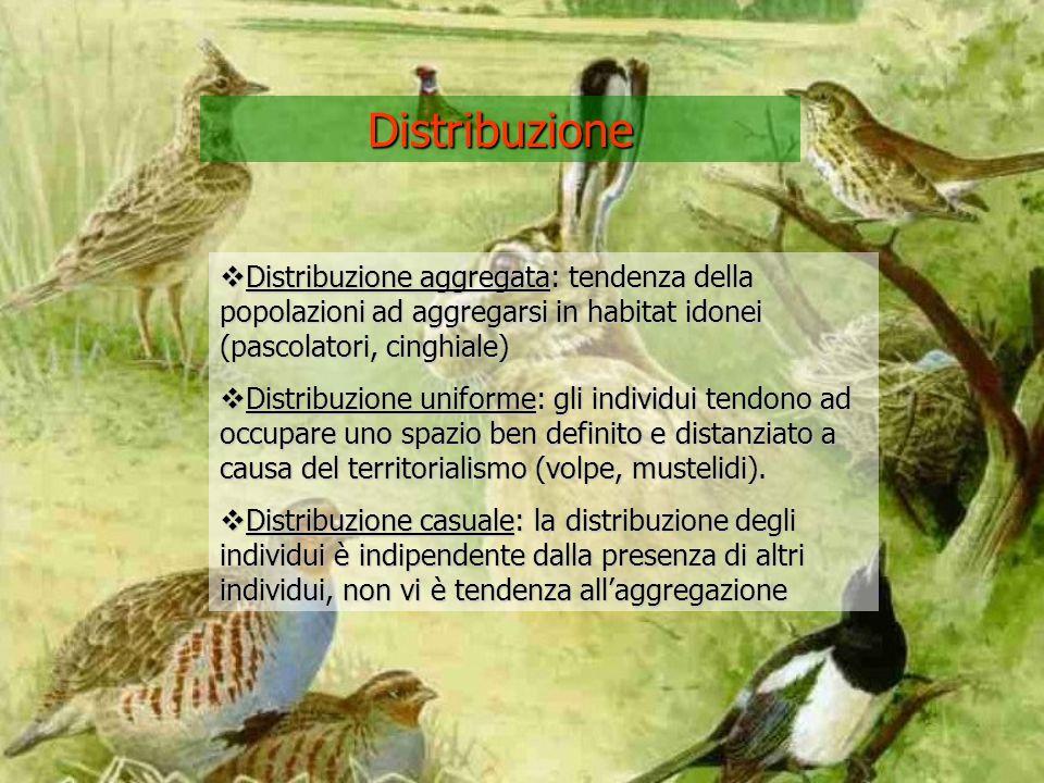 Distribuzione Distribuzione aggregata: tendenza della popolazioni ad aggregarsi in habitat idonei (pascolatori, cinghiale)
