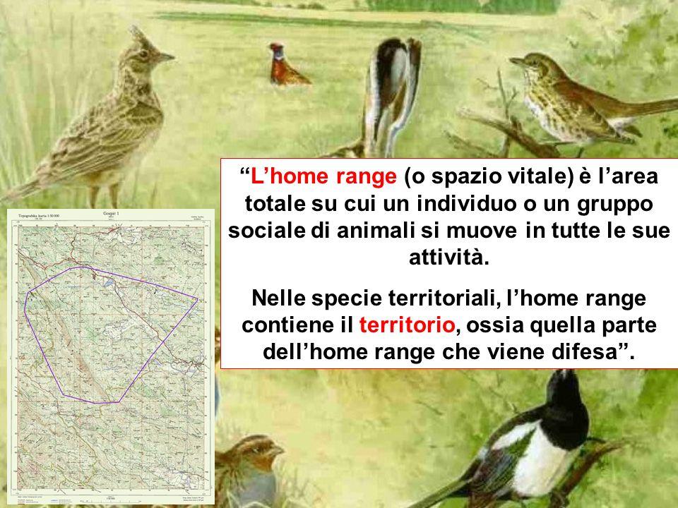L'home range (o spazio vitale) è l'area totale su cui un individuo o un gruppo sociale di animali si muove in tutte le sue attività.