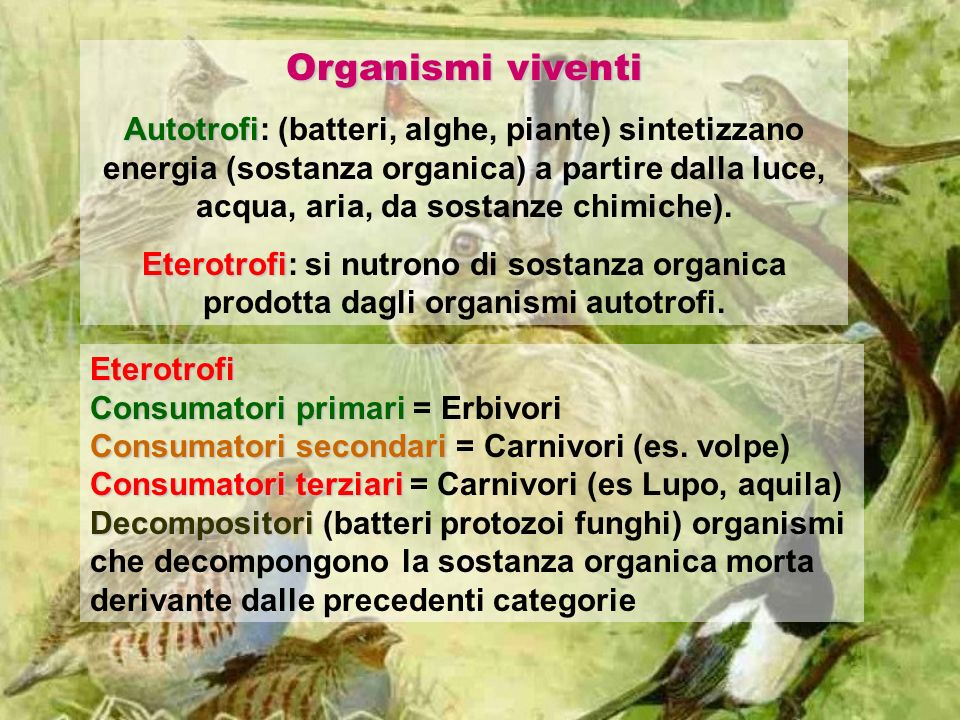 Organismi viventi