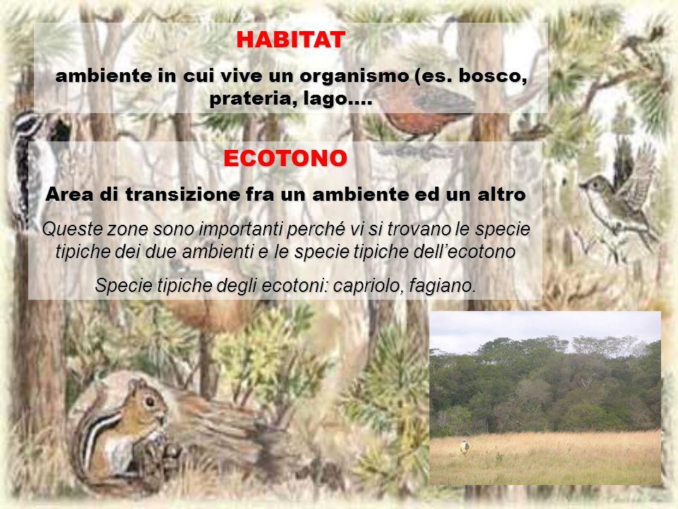HABITAT ambiente in cui vive un organismo (es. bosco, prateria, lago…. ECOTONO. Area di transizione fra un ambiente ed un altro.