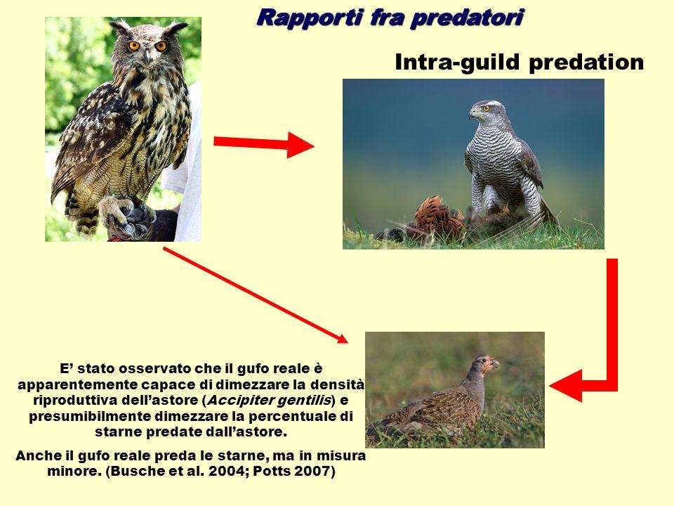 Rapporti fra predatori