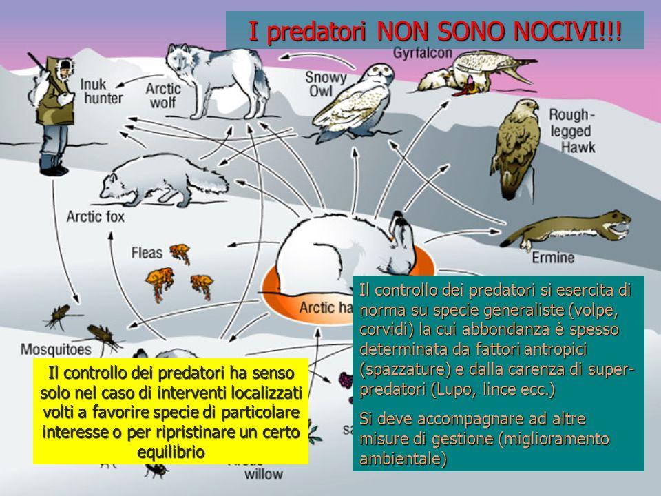 I predatori NON SONO NOCIVI!!!
