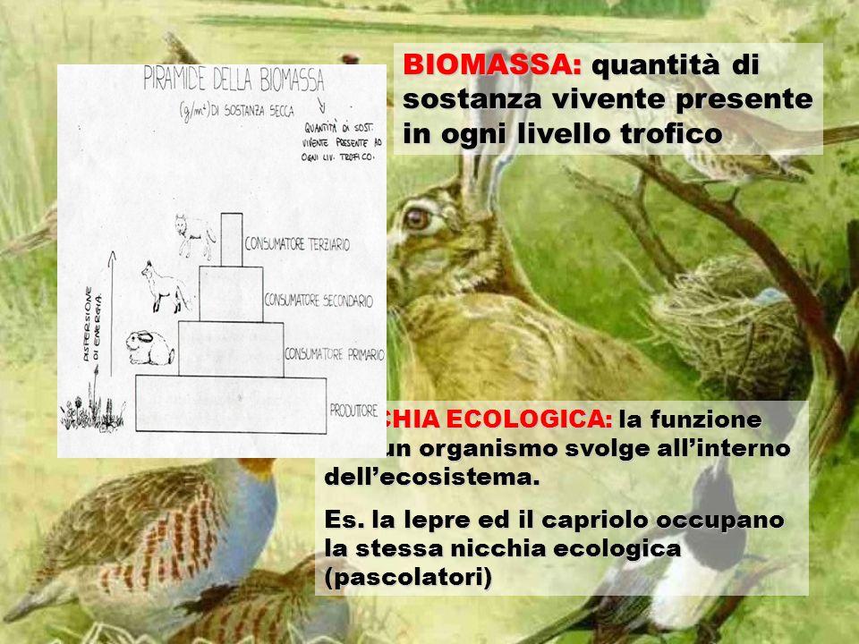 BIOMASSA: quantità di sostanza vivente presente in ogni livello trofico