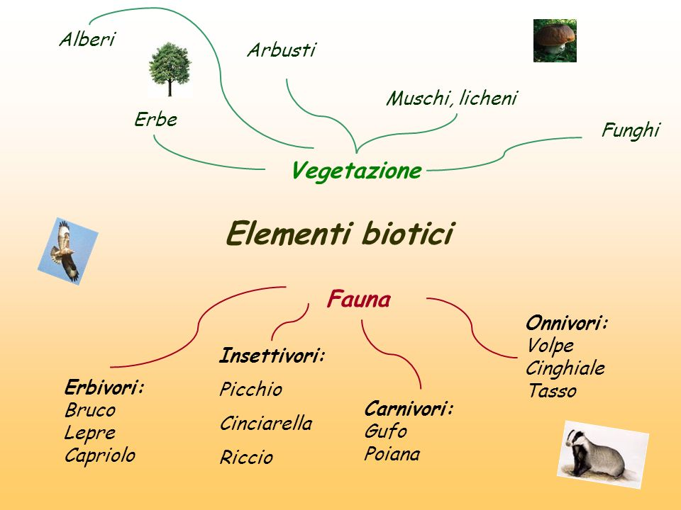 Elementi biotici Vegetazione Fauna Alberi Arbusti Muschi, licheni Erbe