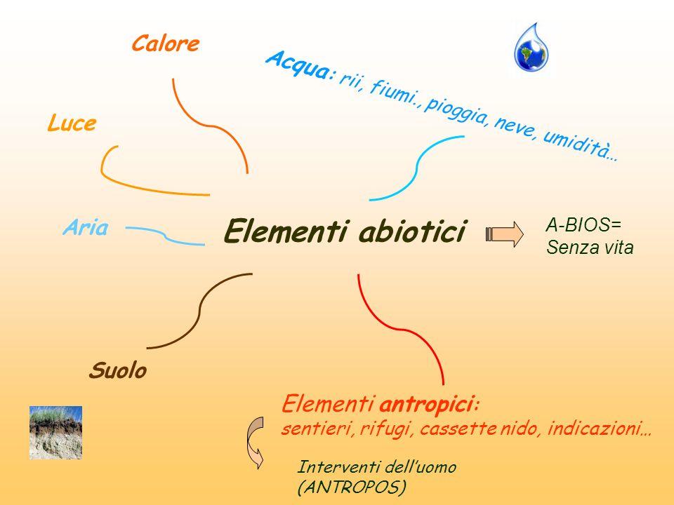 Elementi abiotici Calore Acqua: rii, fiumi., pioggia, neve, umidità…