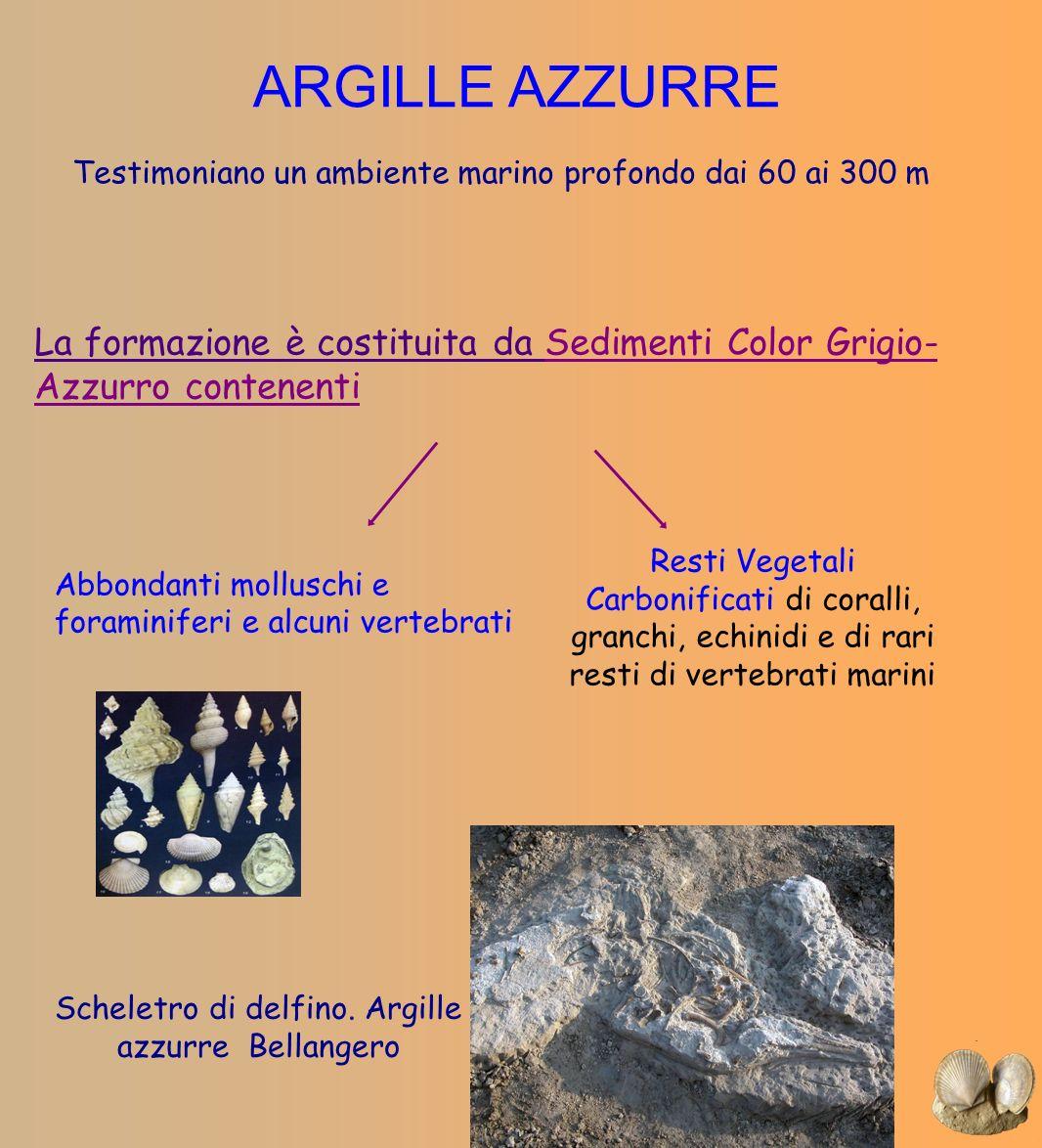 ARGILLE AZZURRE Testimoniano un ambiente marino profondo dai 60 ai 300 m. La formazione è costituita da Sedimenti Color Grigio-Azzurro contenenti.