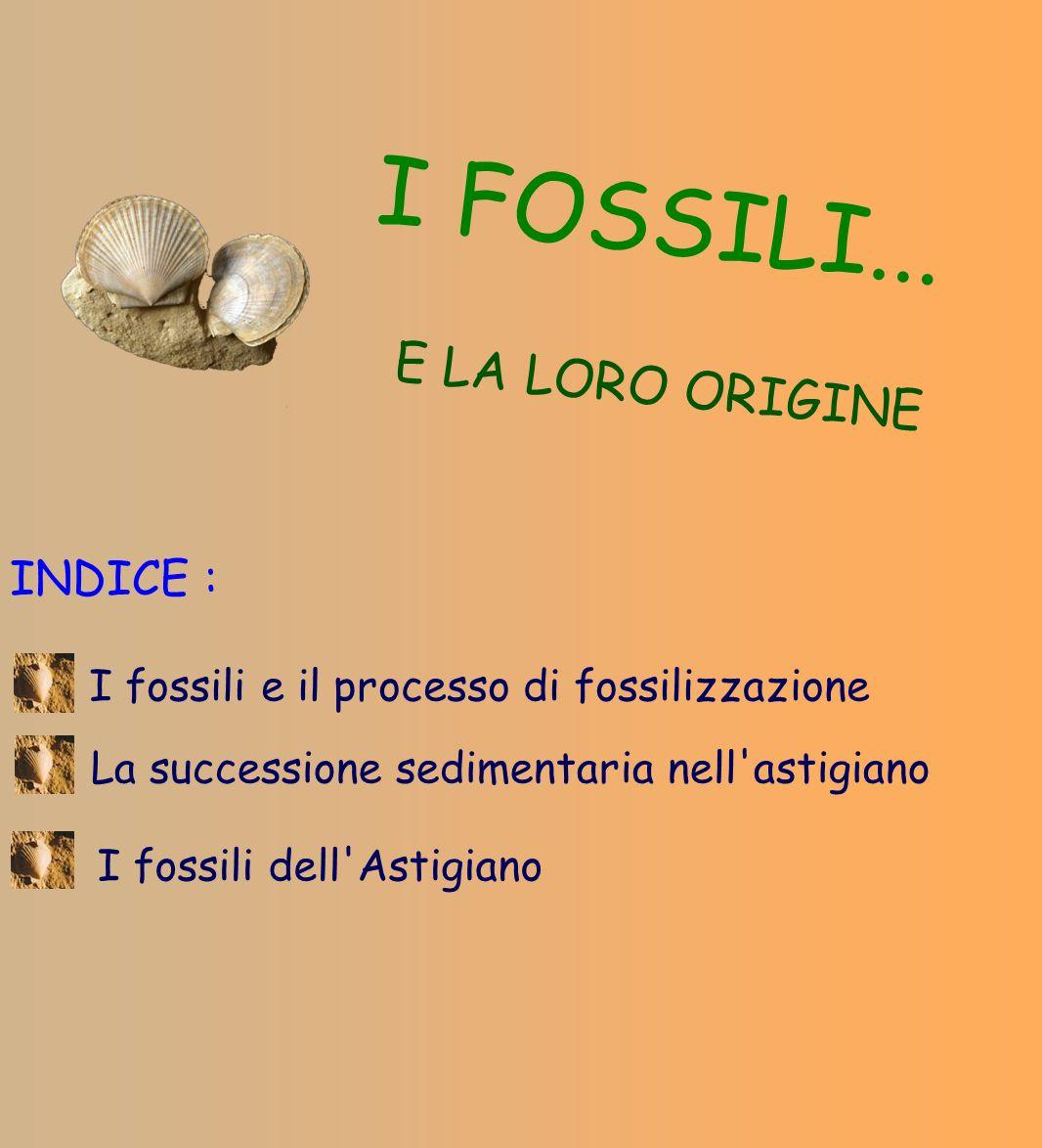 I FOSSILI... E LA LORO ORIGINE INDICE :