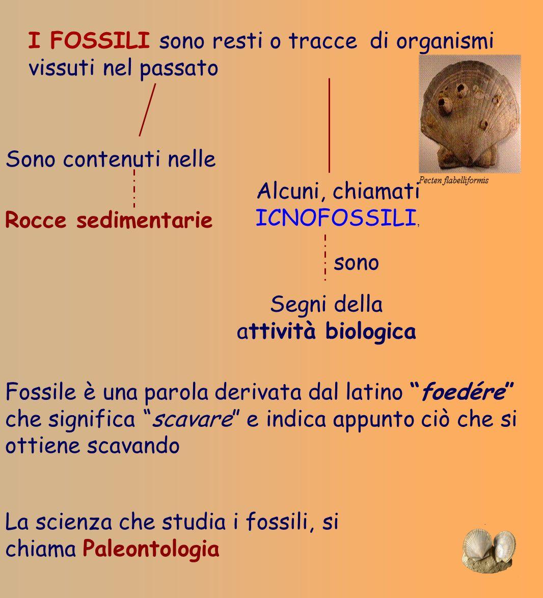 I FOSSILI sono resti o tracce di organismi vissuti nel passato