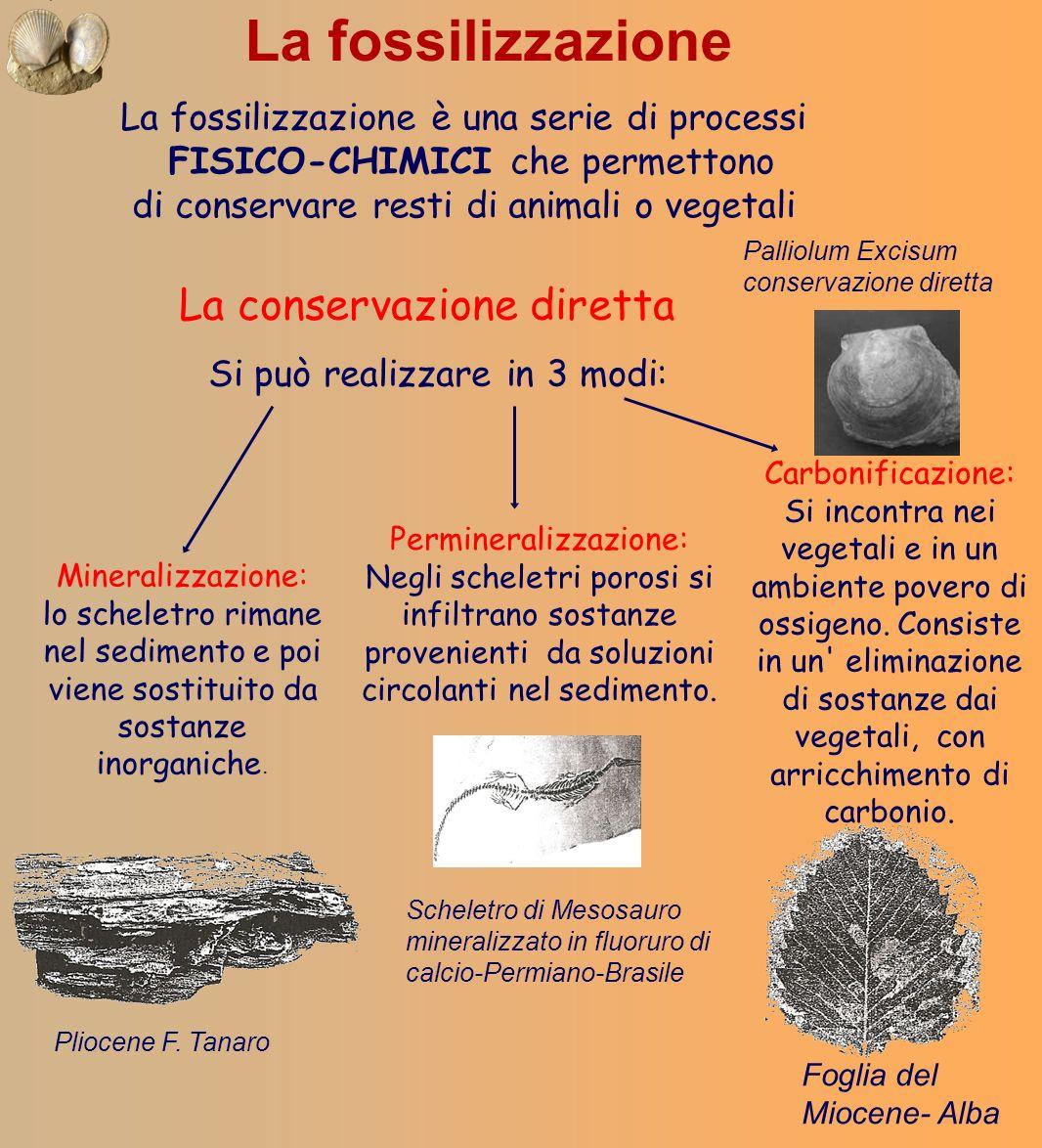 La fossilizzazione La conservazione diretta