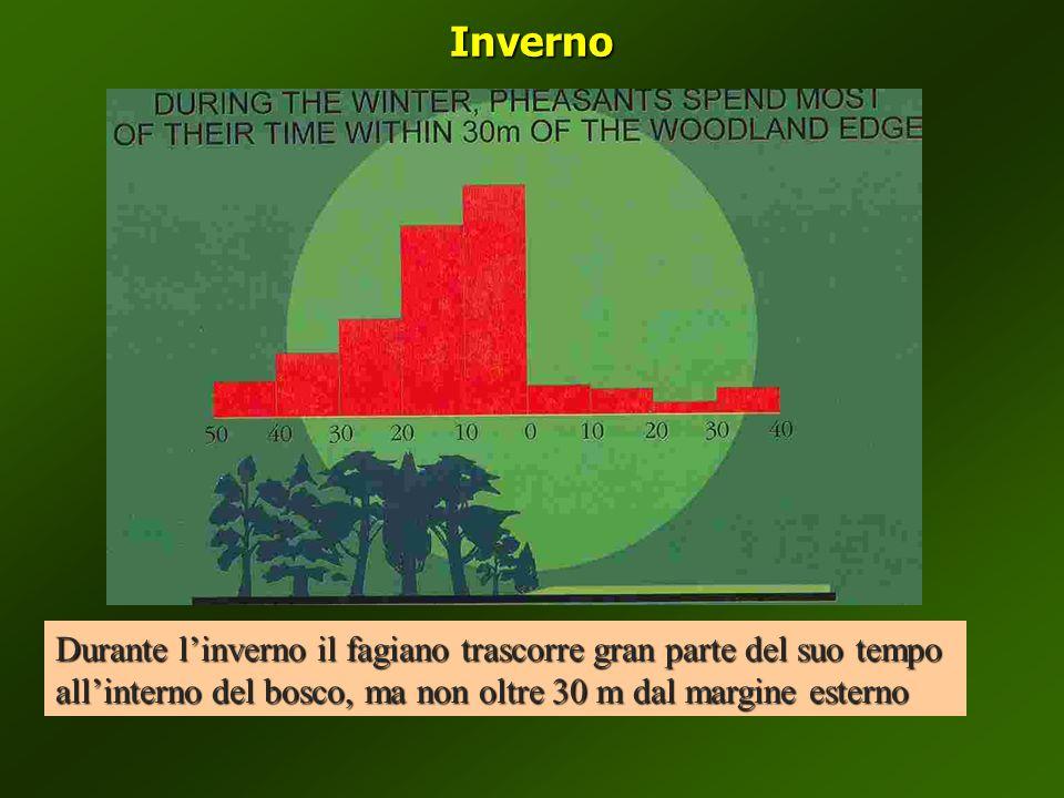 Inverno Durante l'inverno il fagiano trascorre gran parte del suo tempo all'interno del bosco, ma non oltre 30 m dal margine esterno.
