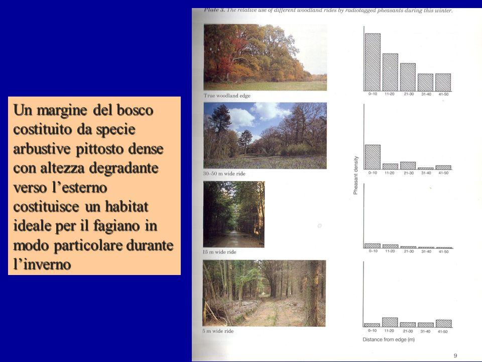 Un margine del bosco costituito da specie arbustive pittosto dense con altezza degradante verso l'esterno costituisce un habitat ideale per il fagiano in modo particolare durante l'inverno
