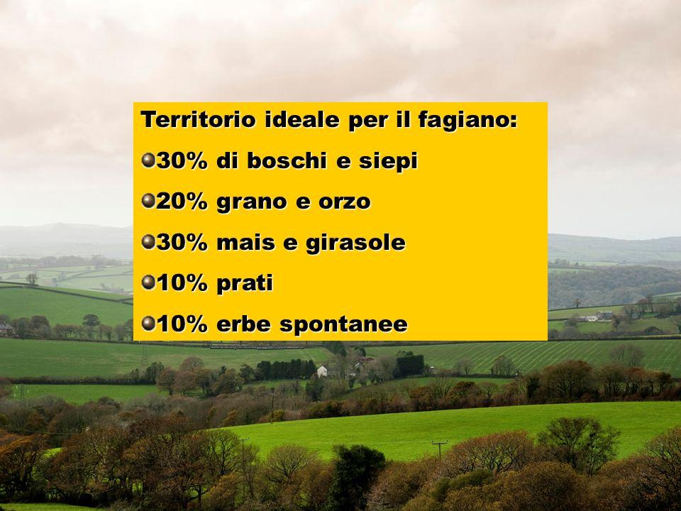 Territorio ideale per il fagiano: