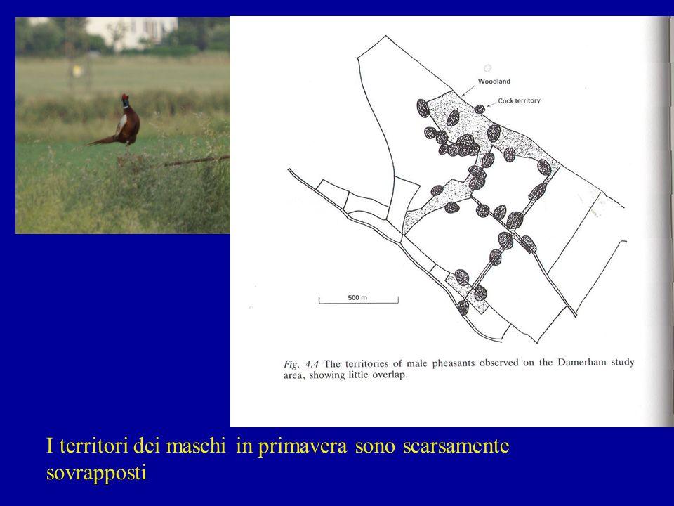 I territori dei maschi in primavera sono scarsamente sovrapposti