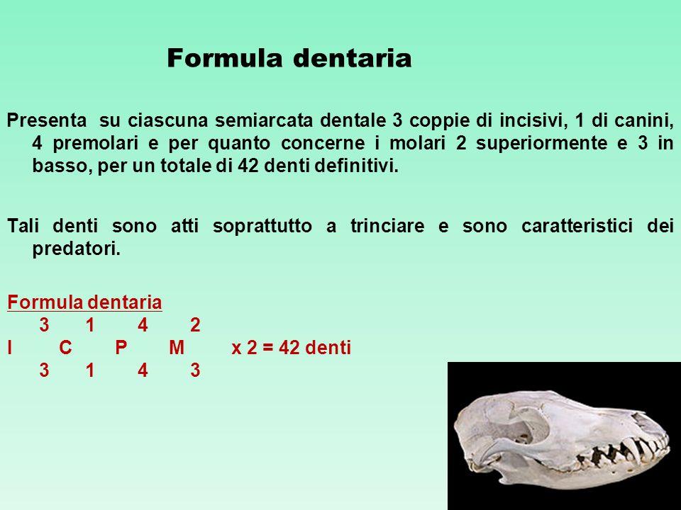 Formula dentaria