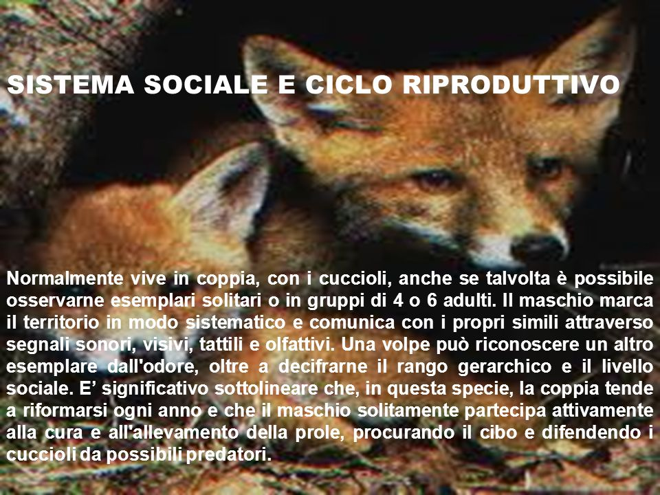 SISTEMA SOCIALE E CICLO RIPRODUTTIVO