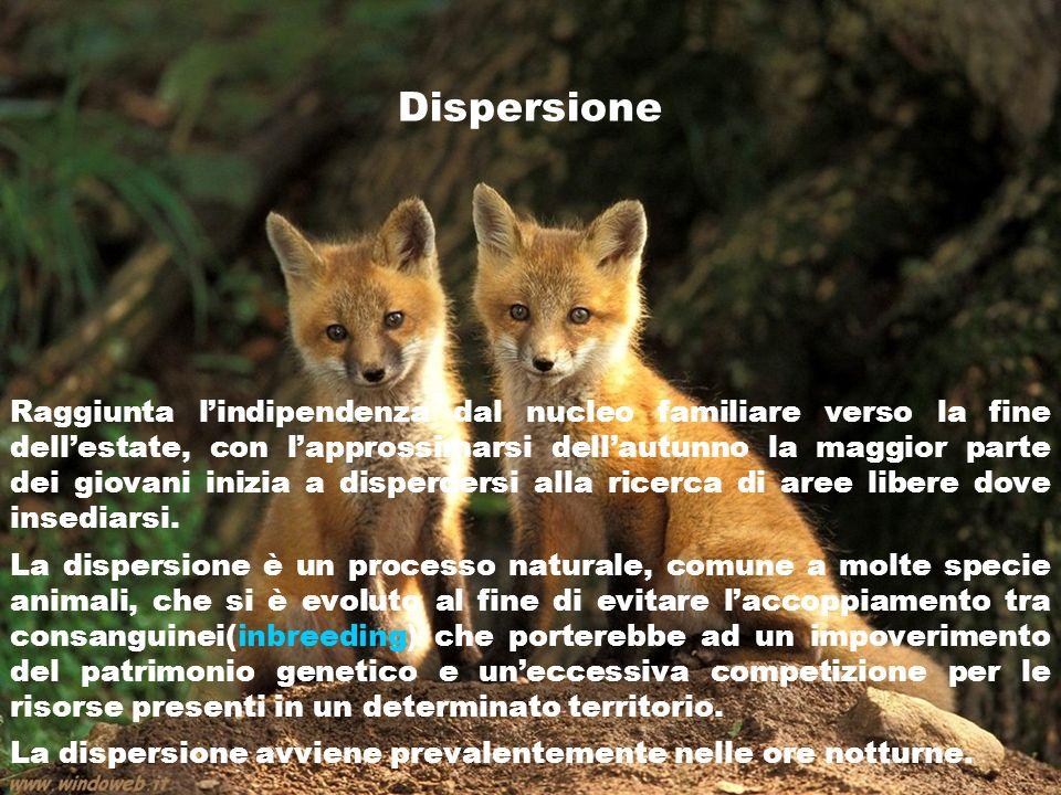 Dispersione