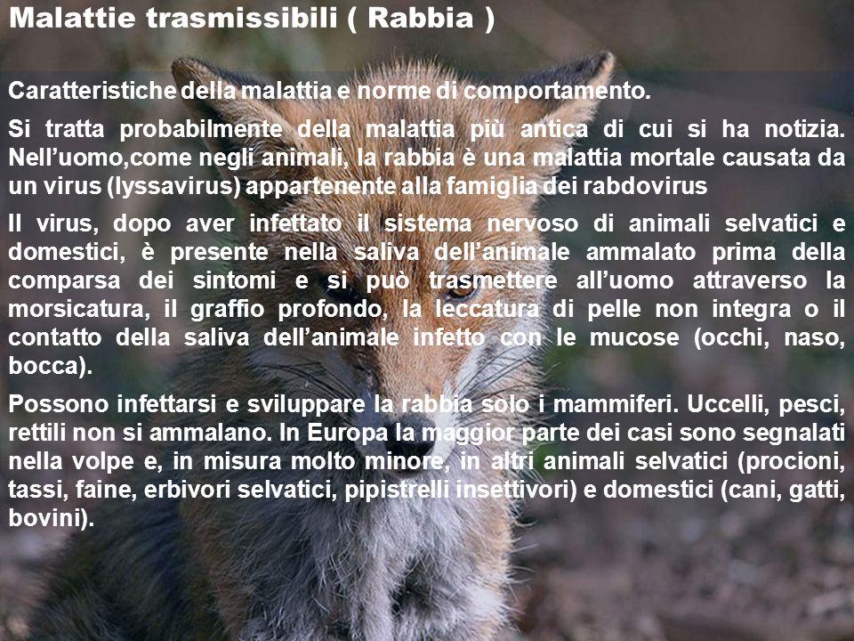 Malattie trasmissibili ( Rabbia )