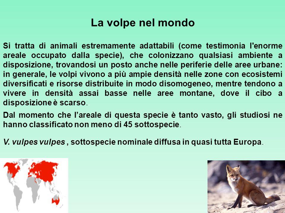 La volpe nel mondo