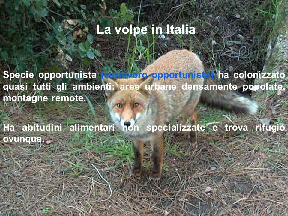 La volpe in Italia