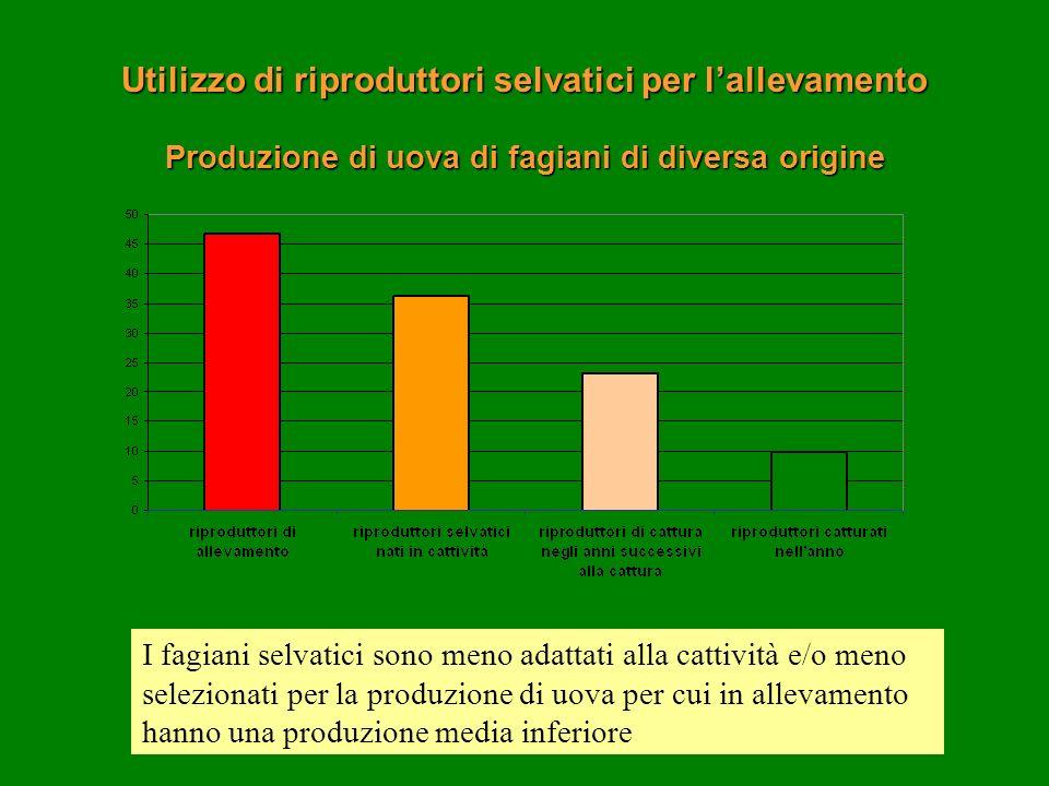 Utilizzo di riproduttori selvatici per l'allevamento