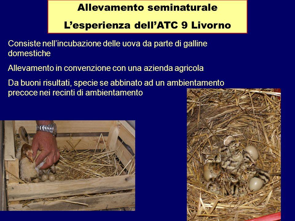Allevamento seminaturale L'esperienza dell'ATC 9 Livorno