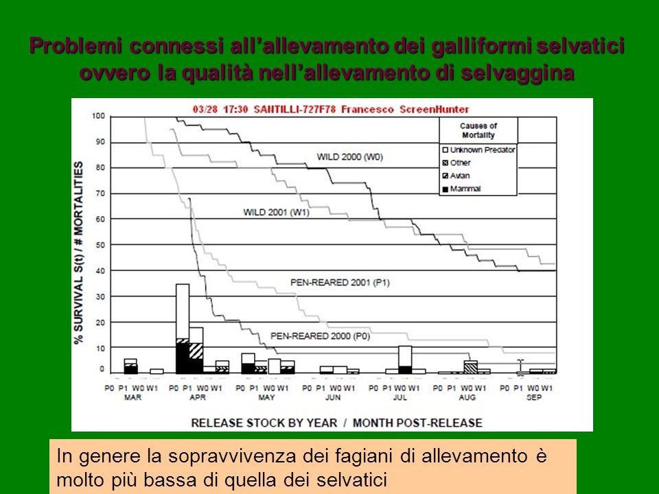 Problemi connessi all'allevamento dei galliformi selvatici ovvero la qualità nell'allevamento di selvaggina
