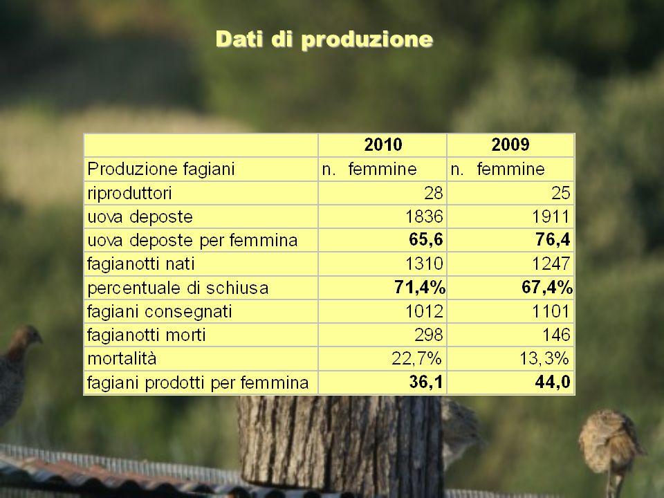 Dati di produzione