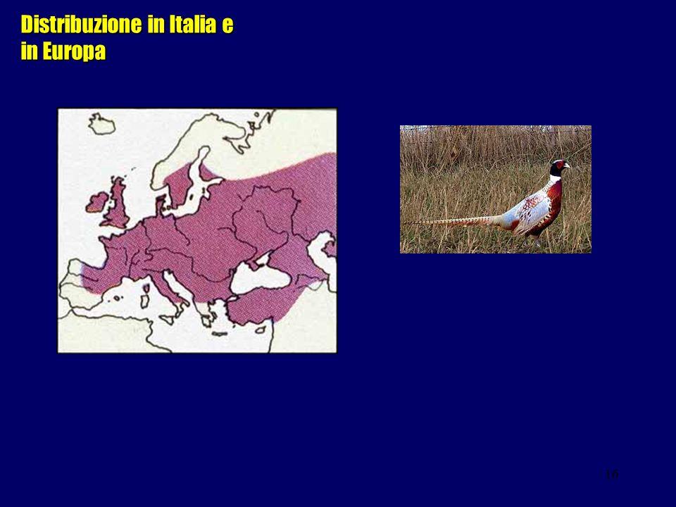 Distribuzione in Italia e in Europa