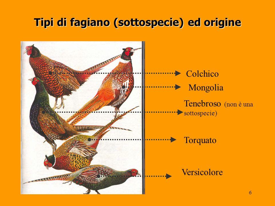 Tipi di fagiano (sottospecie) ed origine