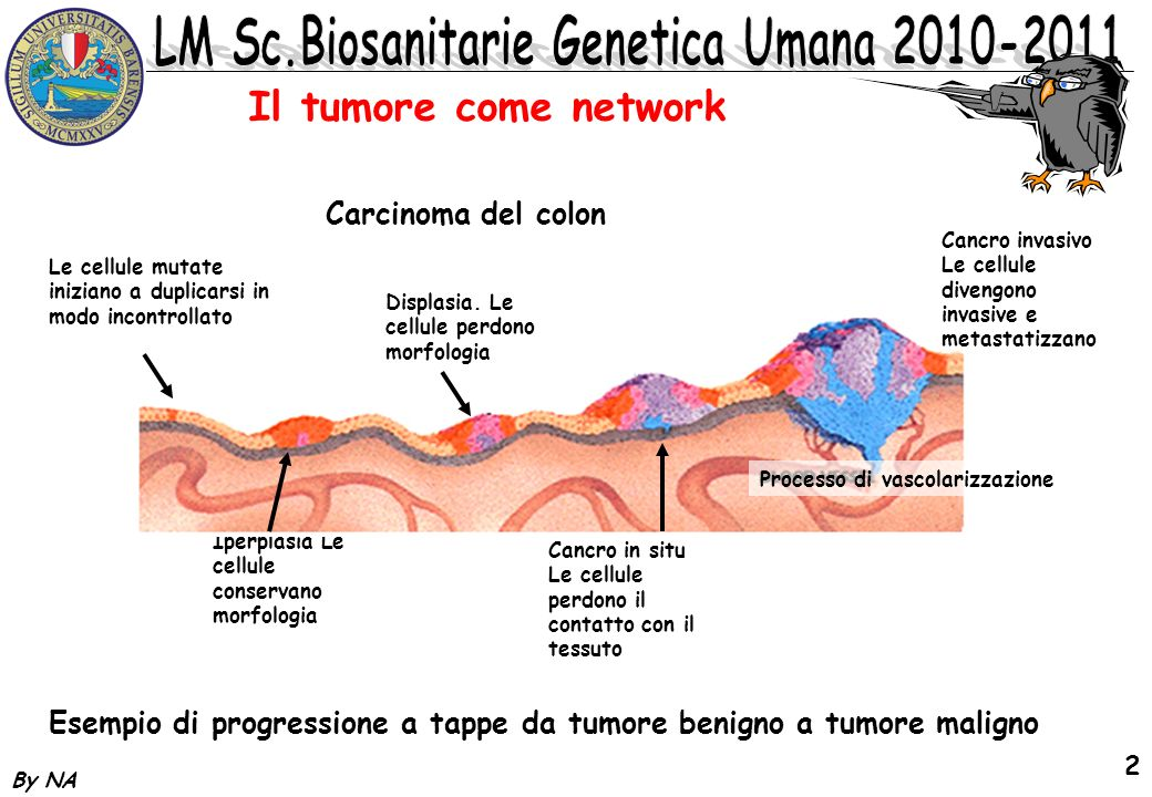 Il tumore come network Carcinoma del colon