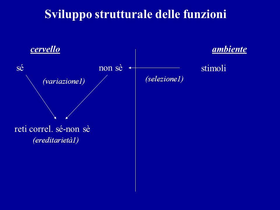 Sviluppo strutturale delle funzioni