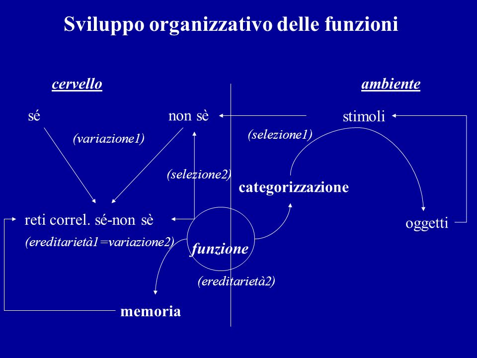 Sviluppo organizzativo delle funzioni