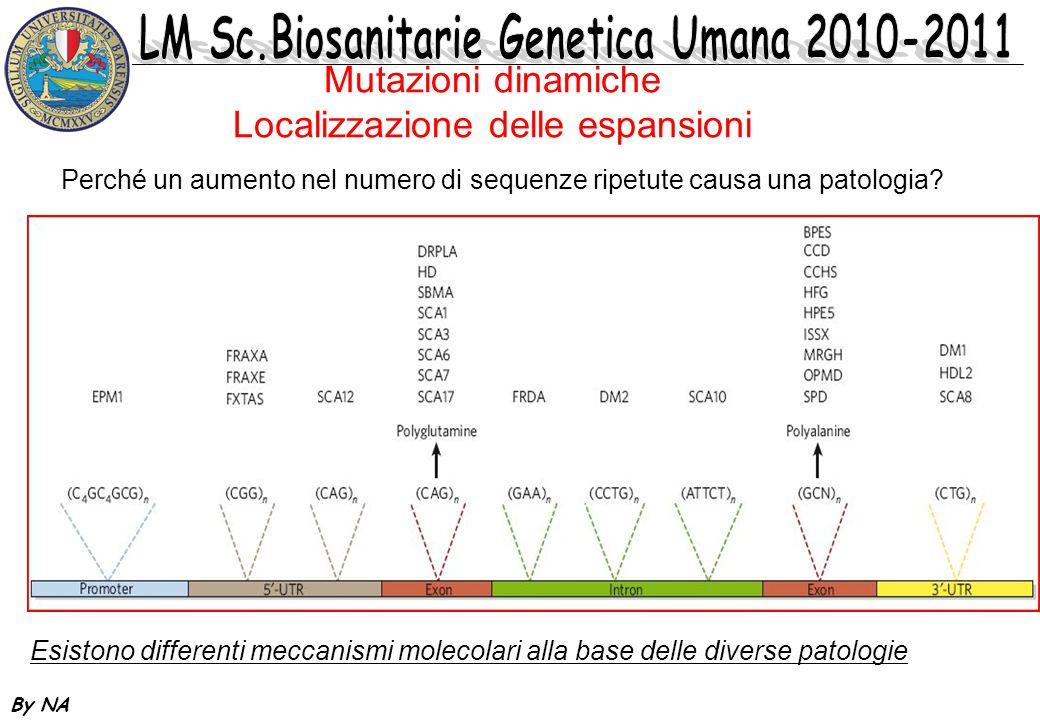 Mutazioni dinamiche Localizzazione delle espansioni