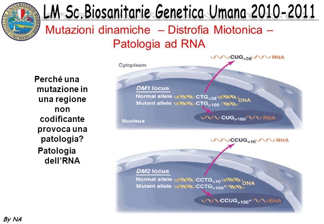 Mutazioni dinamiche – Distrofia Miotonica – Patologia ad RNA