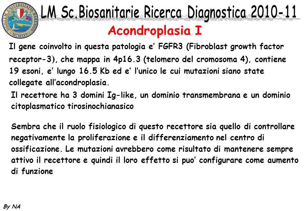 Acondroplasia I